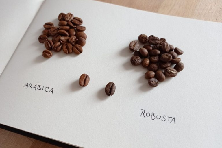 káva arabica vs robusta