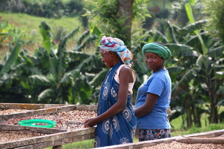 Férový obchod, průhlednost původu a zpracování kávy.