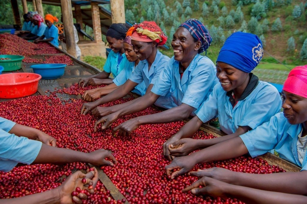 Rwandské ženy pracující v kávovém družstvu