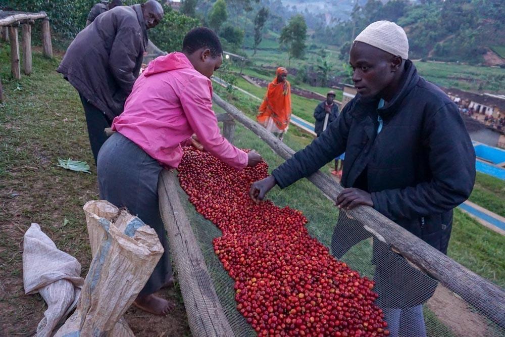 Zpracování kávových třešní v Burundi