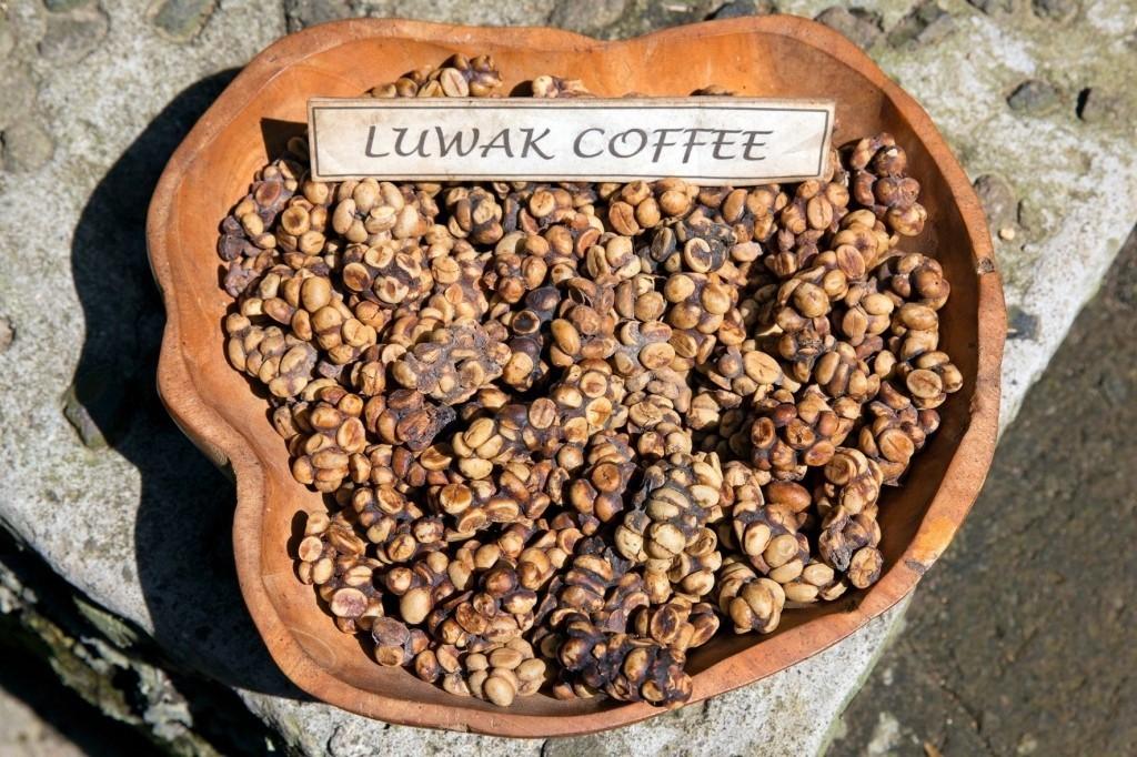 Cibetková káva neboli kopi luwak.