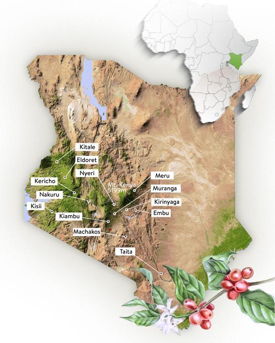 oblasti produkce kávy v keni