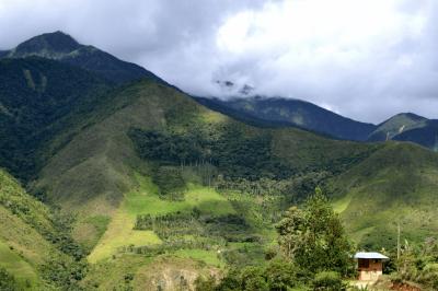 pěstování kávy v peru na úpatí And