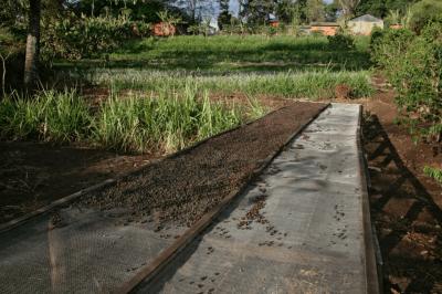 zpracování kávy v tanzánii
